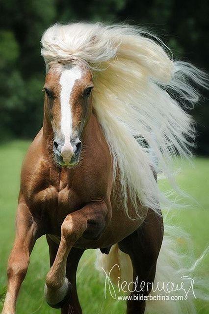 Løbende hest