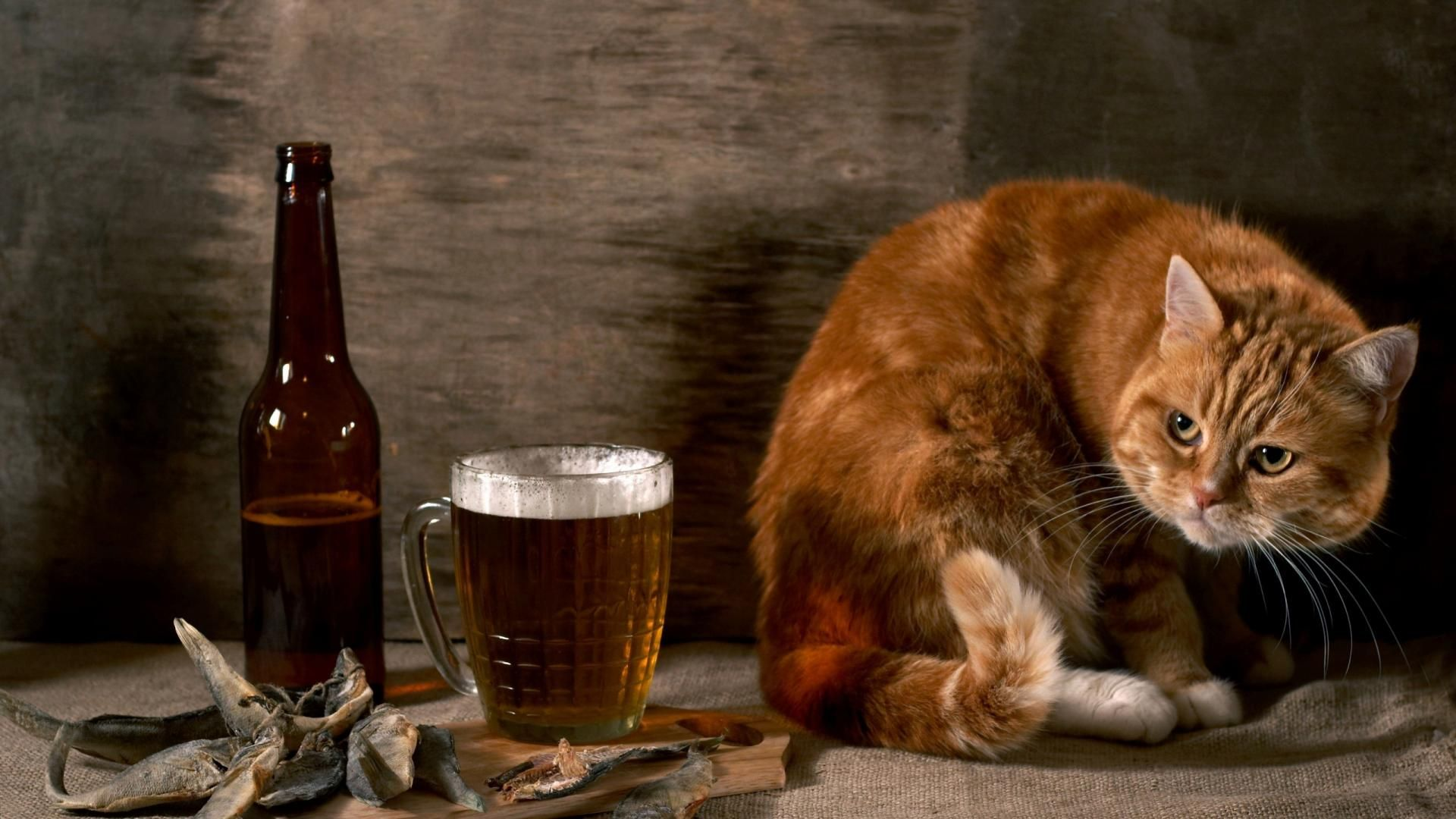 the drunker cat wallpaper | suyoon | pinterest | funny animal