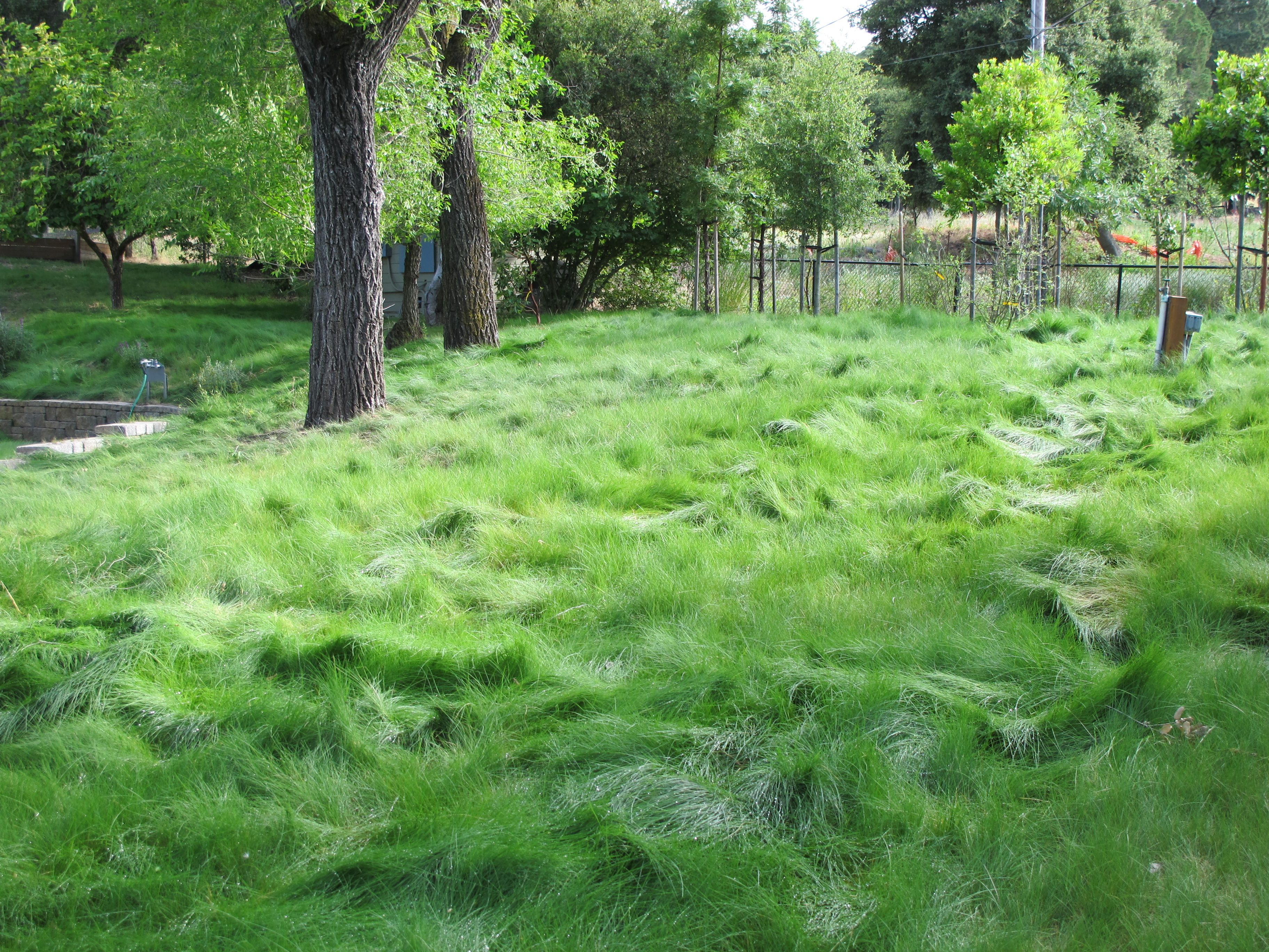 how long does grass take to grow after mowing