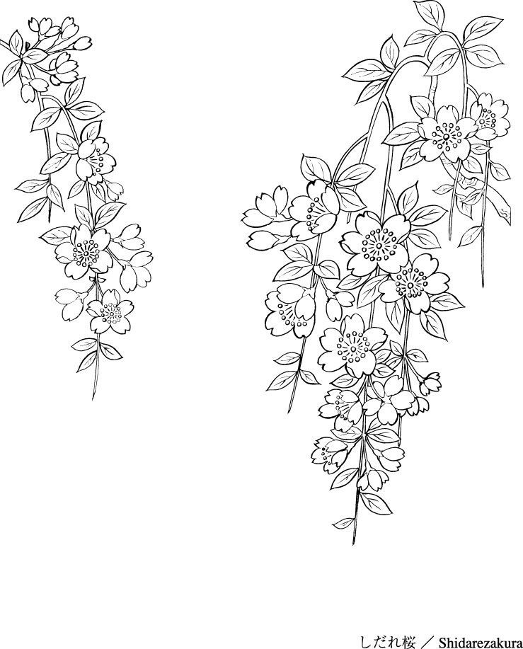 Japanese Line Drawing Plant Flowers Vector Material Cherries 2