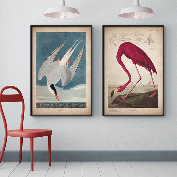 Audubon Birds Print Set Flamingo Tern Of America John James Large Wall Art