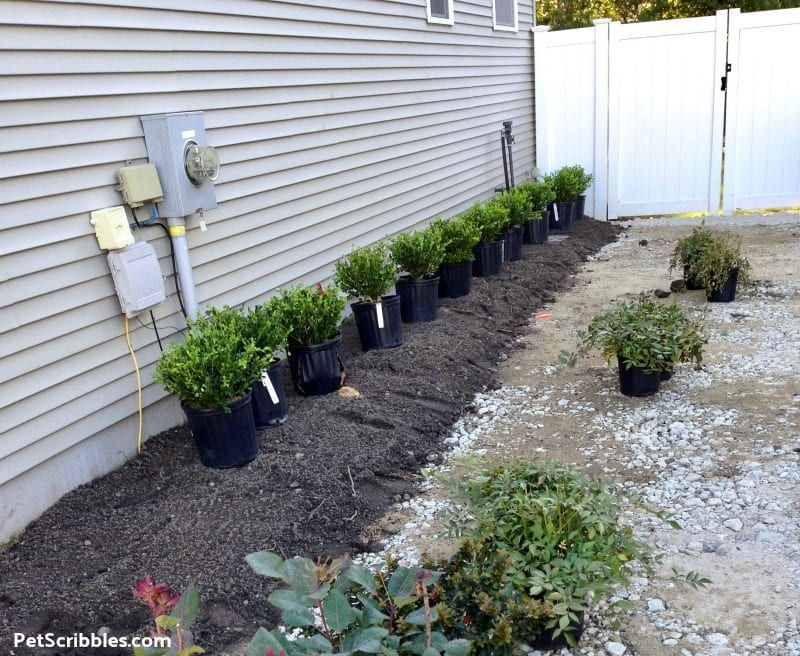 Side Yard Makeover: Easy Care and Attractive | Backyard ...