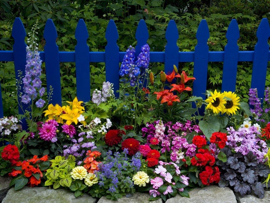 Beautiful Flower Garden summer flowers garden bloom yard fence
