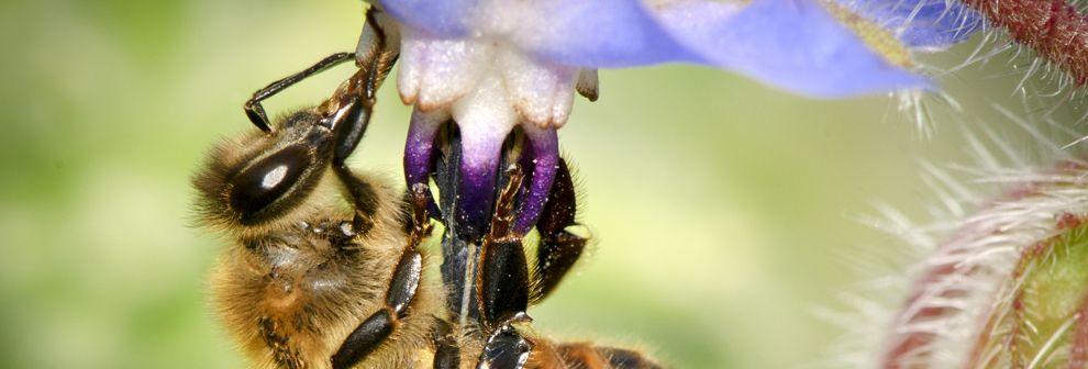 4e60bc8a4e66551c4592e3645b1ce500 - How To Get A Pest Control License In Georgia