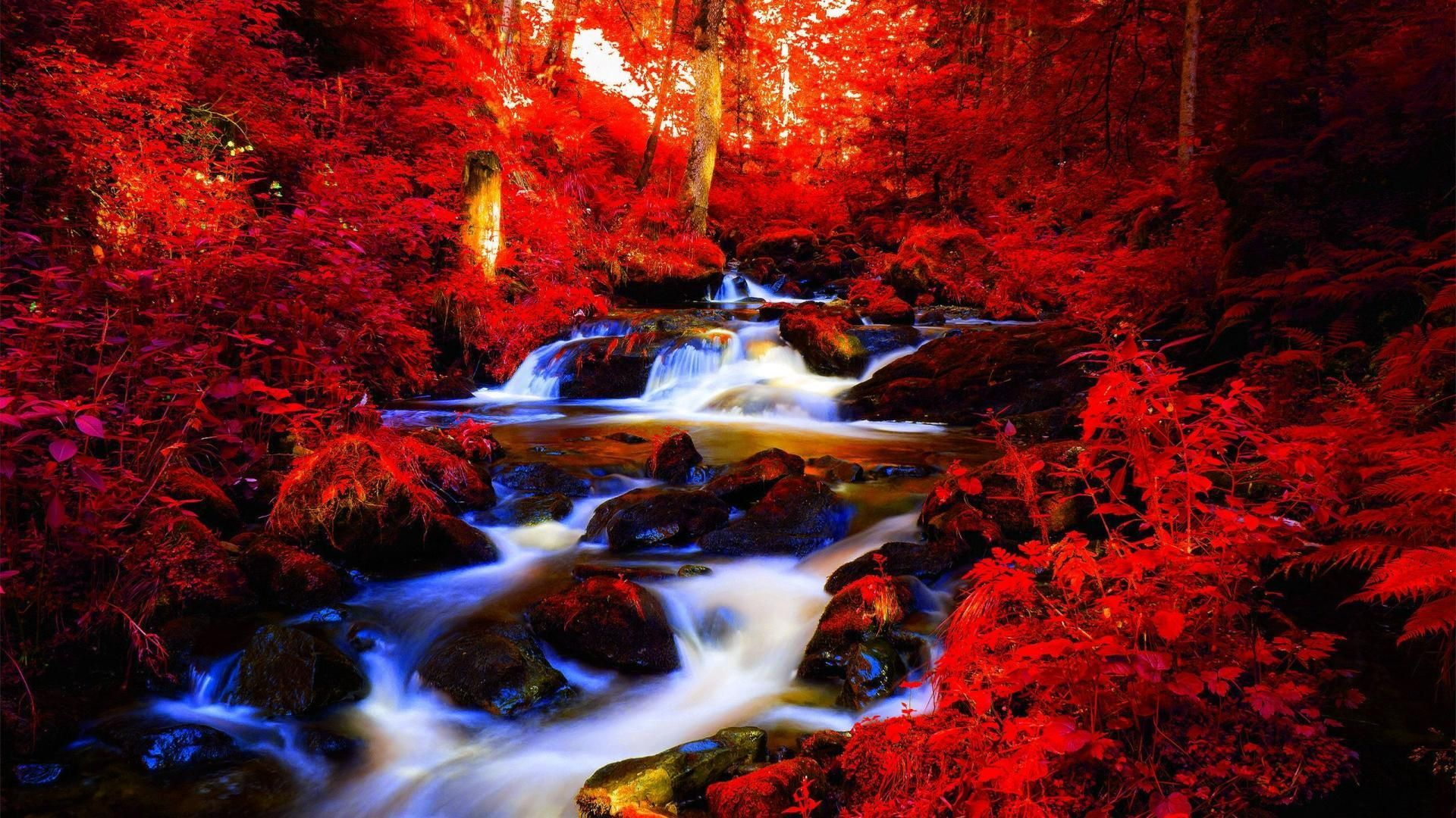 Red Autumn Forest Stream Wallpaper Black Forest Germany Forest Waterfall Waterfall