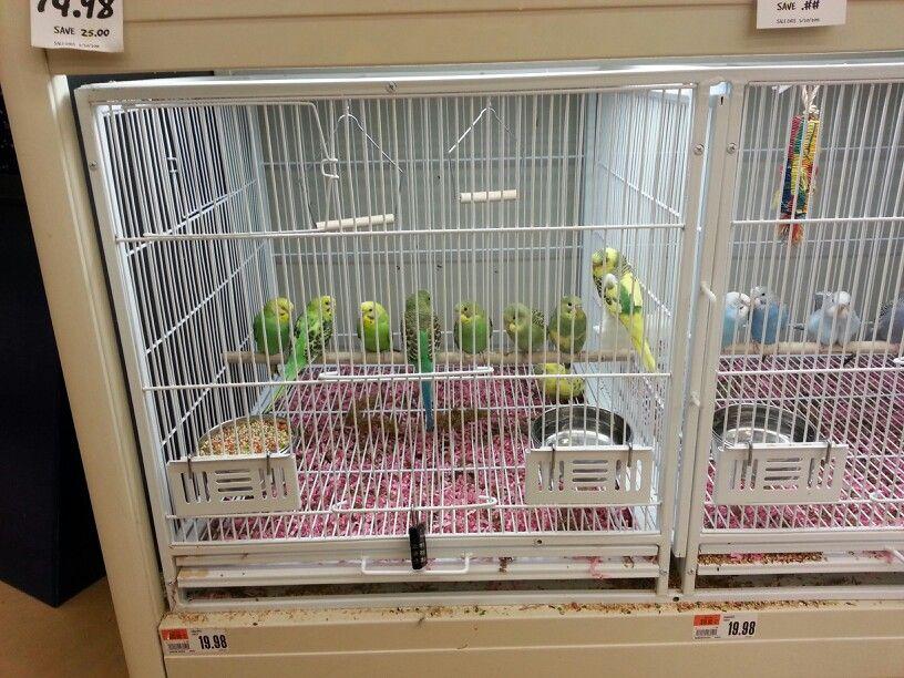 A Group Of Parakeets At Pet Supplies Plus Pet Supplies Plus Pet