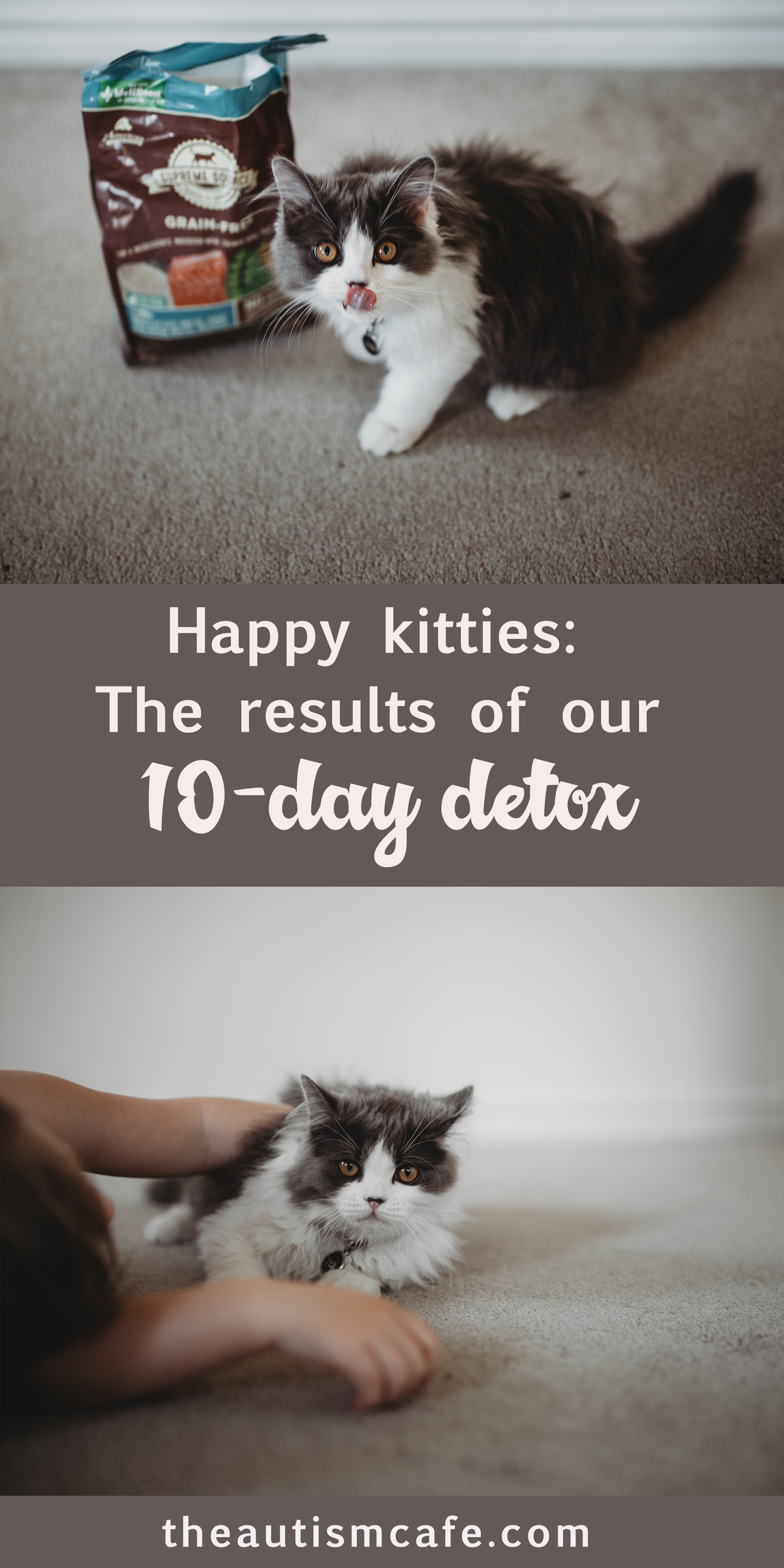 Love your pets even more the results of our 10day detox