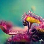 Joni Niemelä's Macro Photographs Capture Carnivorous Plants' Alien-Like Structures