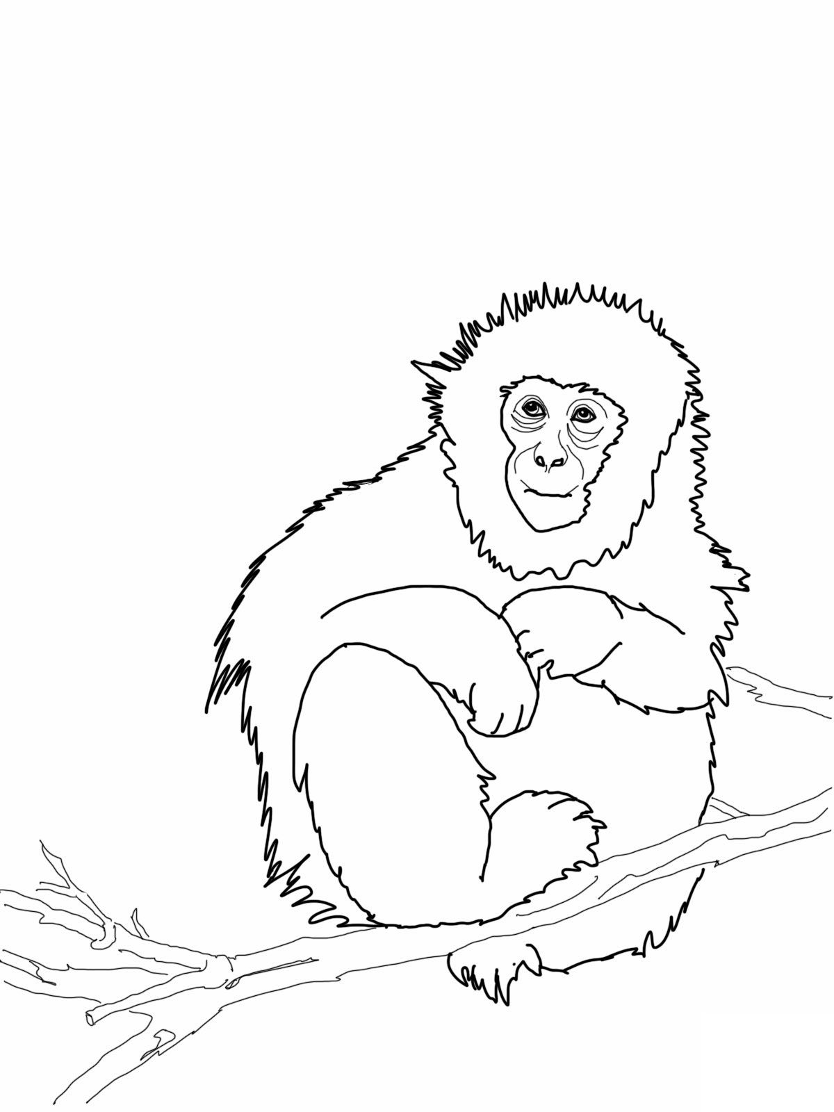 Cute-Monkey-Coloring-Pages-Printable.jpg 1,200×1,600 pixels ...