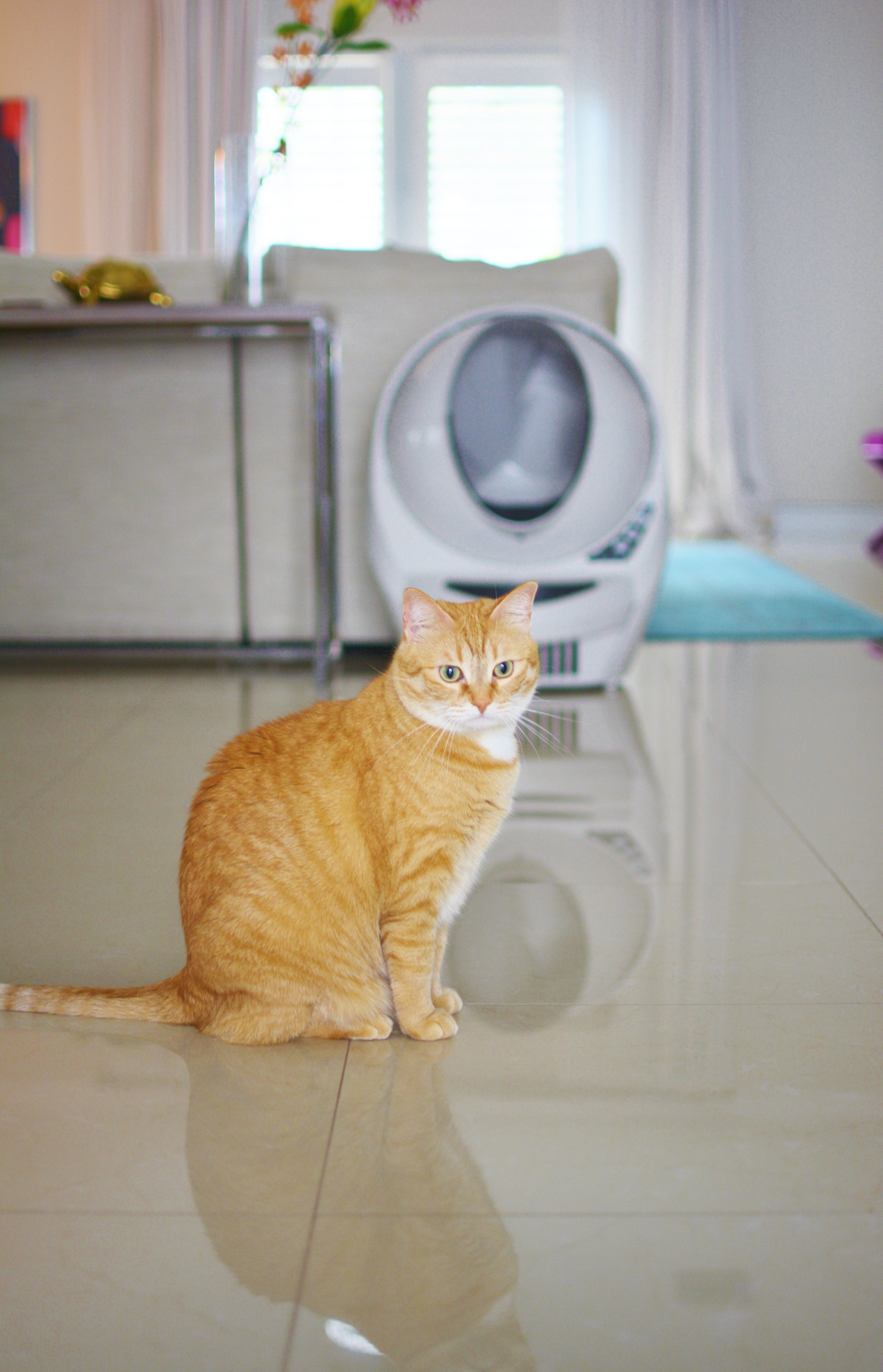 Stop scooping cat litter! With features like the automatic