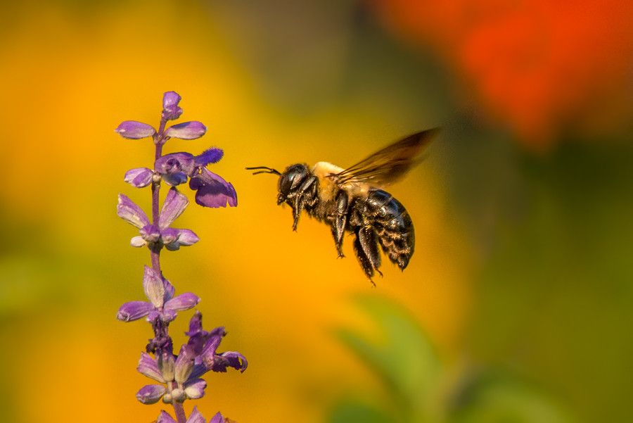 Bumbling by Colin Michaelis on 500px