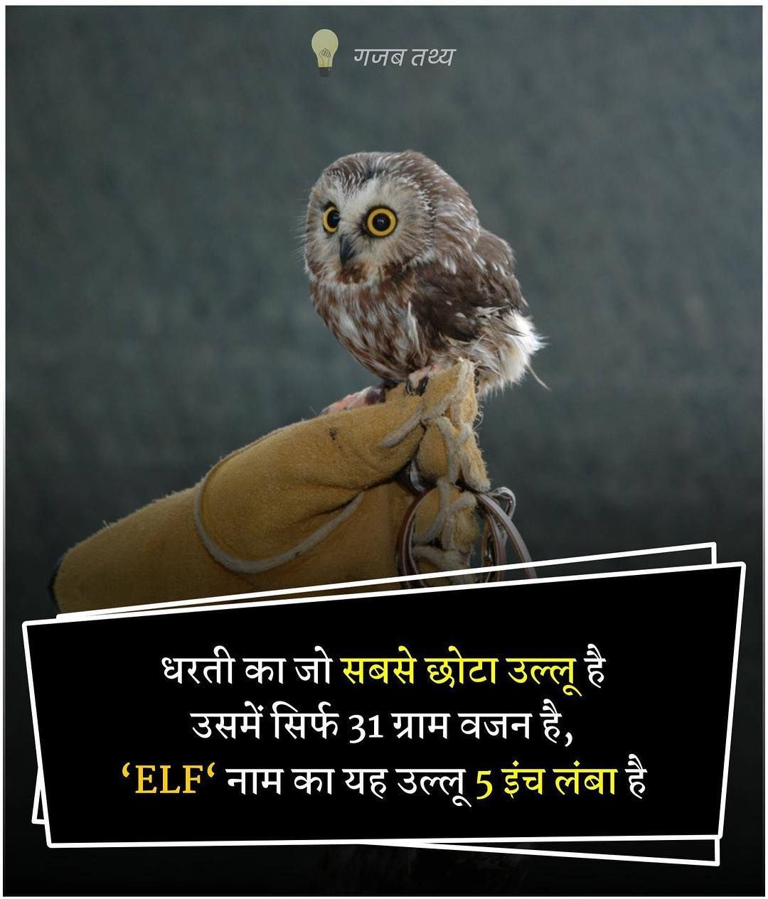 About Owl in Hindi