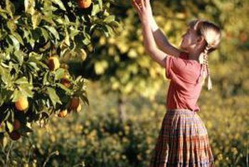 When Should I Copper Sulfate My Fruit Trees? | Diseases and Pests