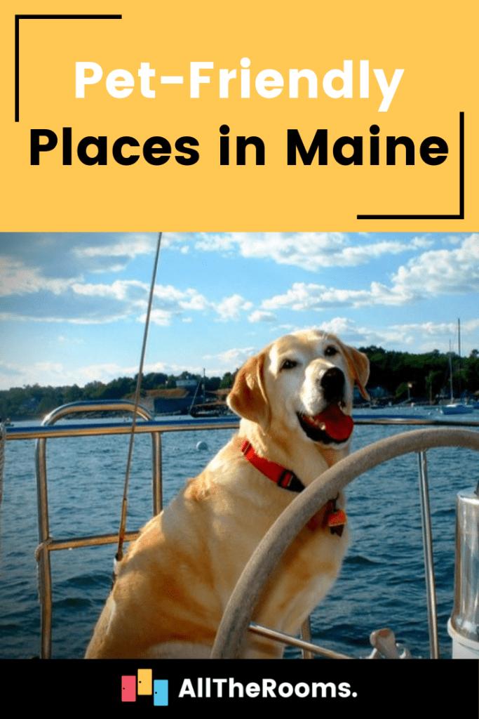 Pet-Friendly Maine: Our Favorite Locations