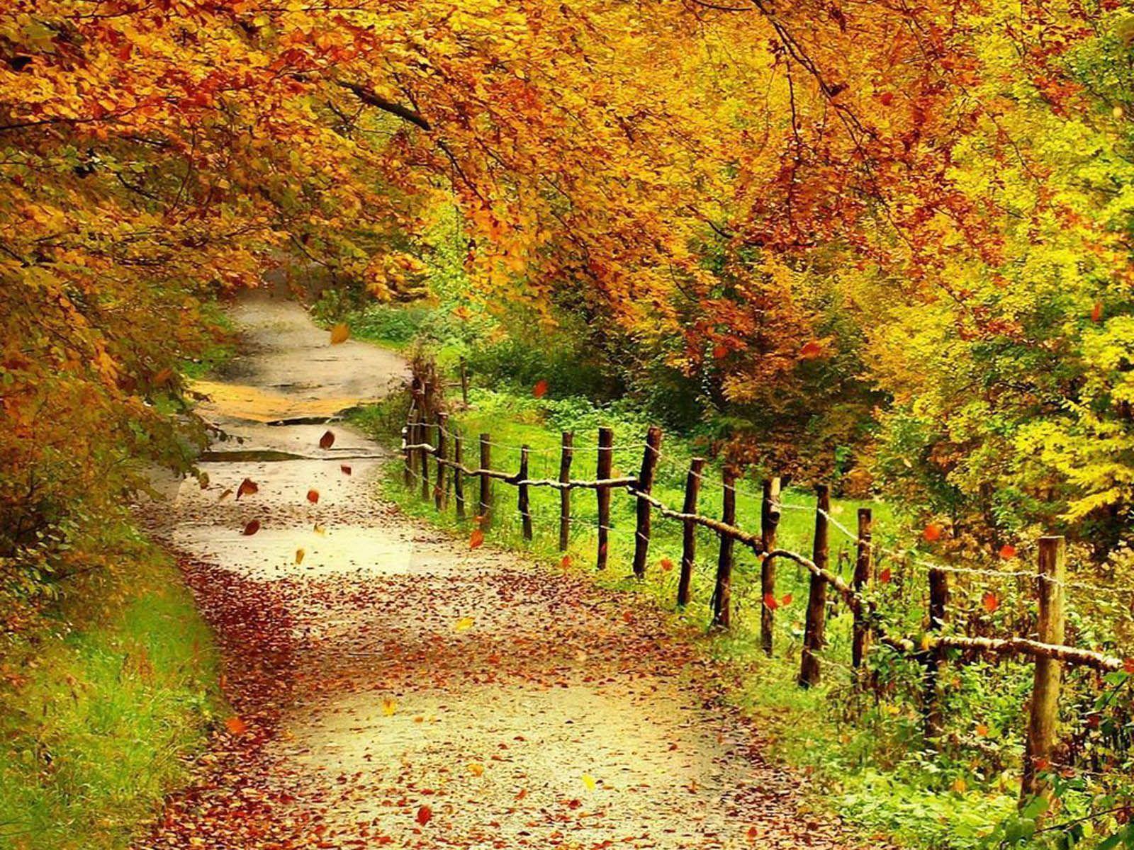 Belle + automne + Paysage + + Fonds d'écran