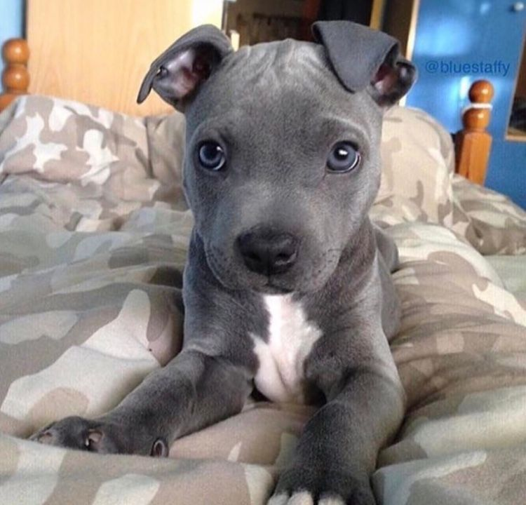 Pin by Sophia on puppies and kitties Cute animals, Baby