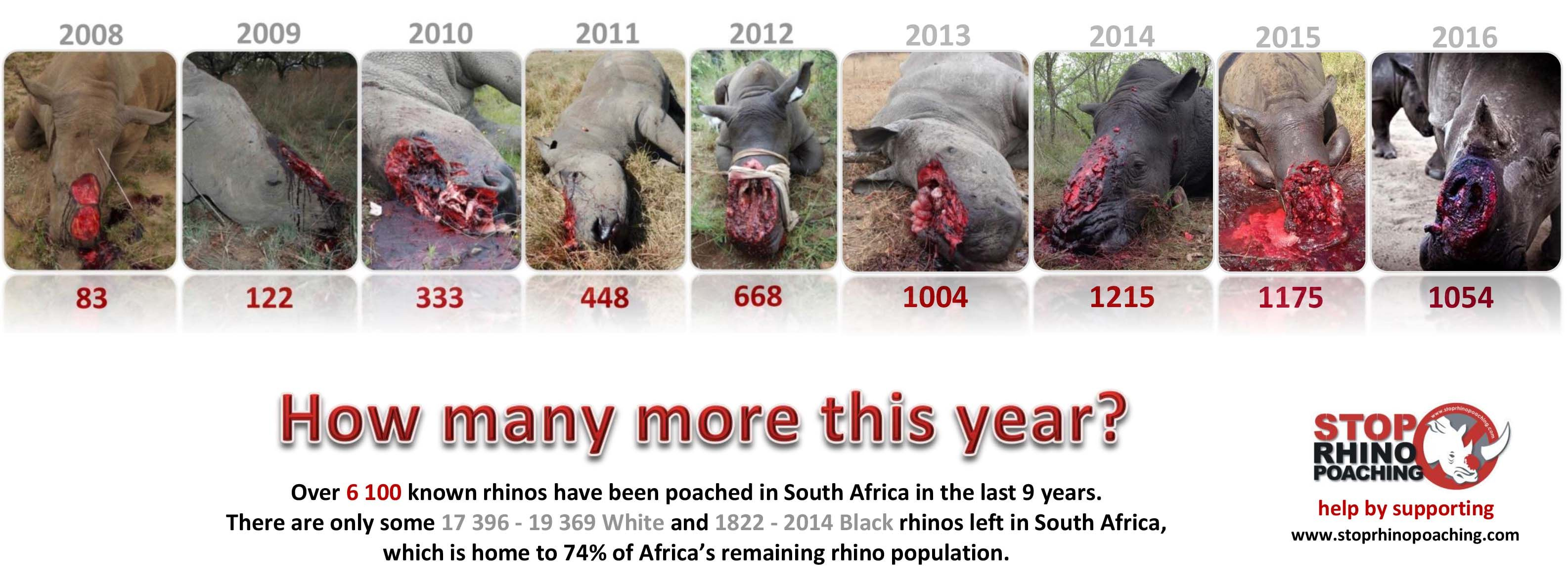 Animal Crocodile And Eliphamtcomic Porn rhino poaching statistics | rhino poaching, africa, elephant