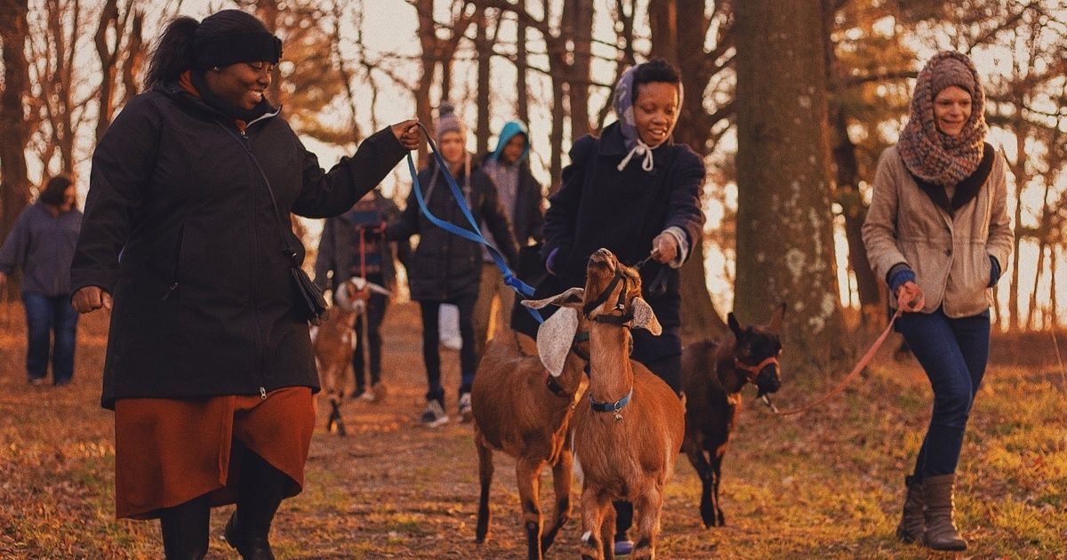 You Can Take a Walk With Goats for Free, and It's As Great