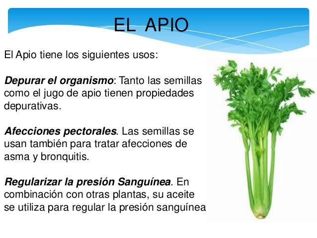 Plantas medicinales remedios pinterest for 10 plantas ornamentales y para que sirven