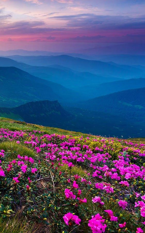 Experience a beautiful mountain atmosphere with the amazing Mountain Flower Live Wallpaper! Enjoy the marvelous view of lovely pink wild flowers scattered ...
