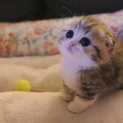 Cutecat Baby Katzen Wilde Katzen Katzen
