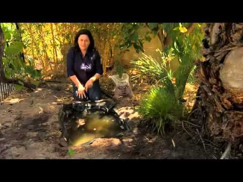 Frog Pond for under $100 - Woodvale Fish & Lily Farm Perth ...
