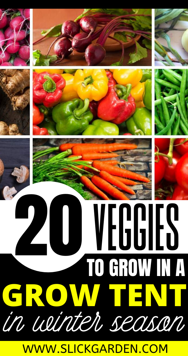 20 Easy Vegetables To Grow In Grow Tent In Winter Season 400 x 300