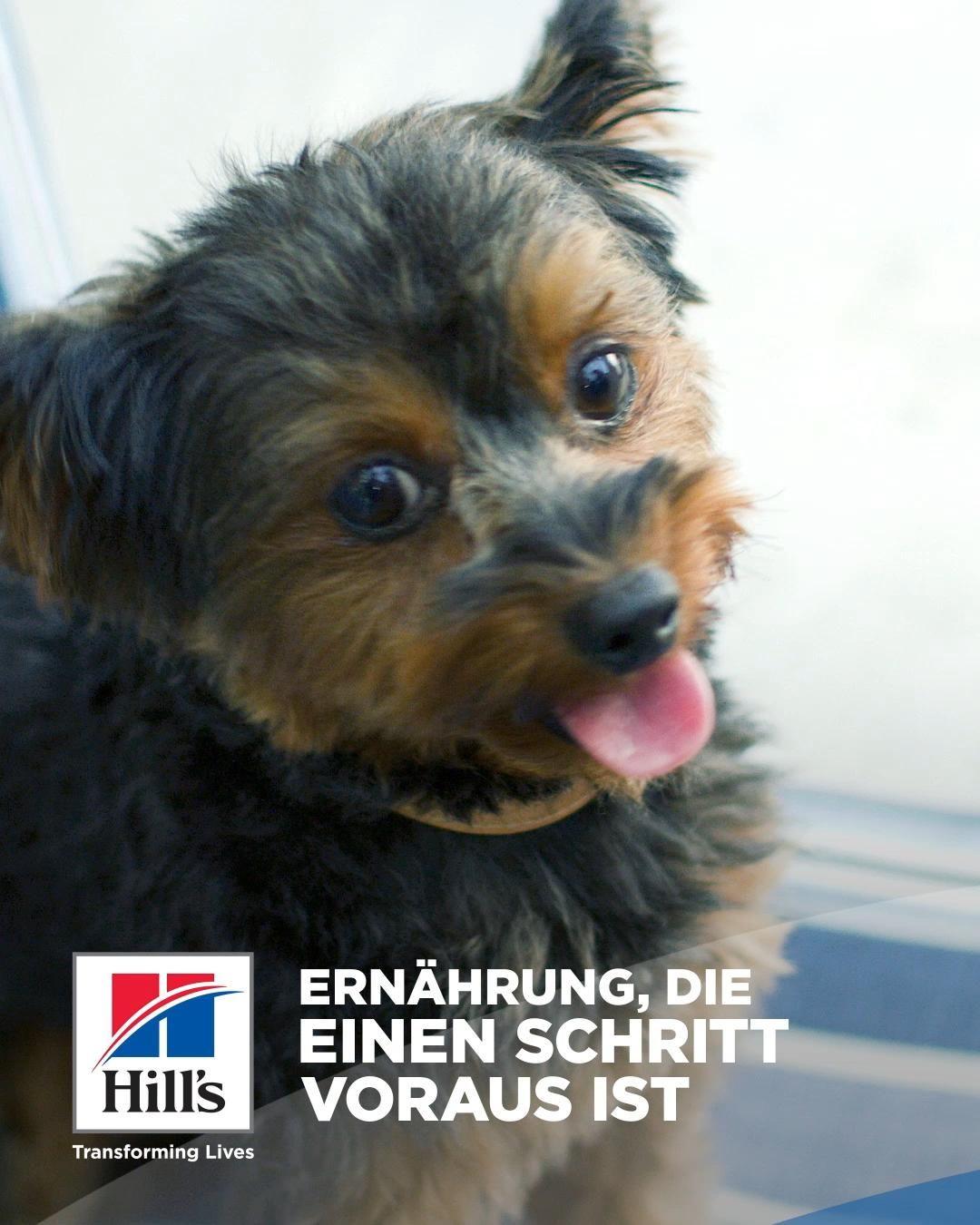 Hill S Pet Nutrition Video Susse Hunde Und Katzen Supersusser Welpe Hunde Und Kinder