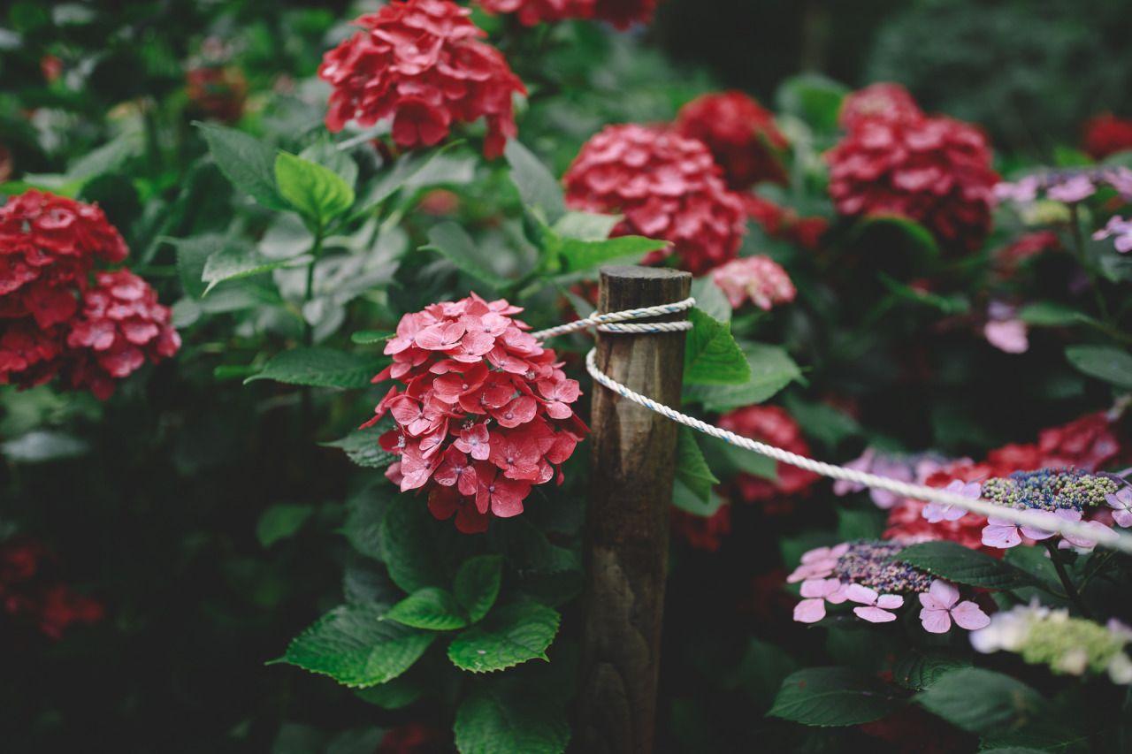 Boohwanj Flowback Pinterest Pretty Flowers Flowers And Temple