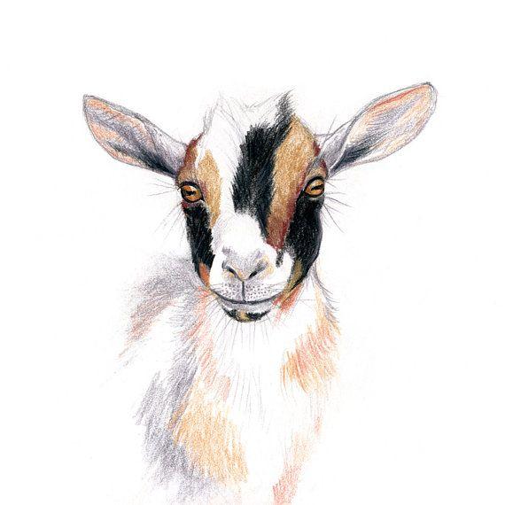 Nigerian Dwarf Goat Wall Art Print Goat Art Goat