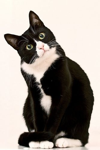 Photo of tuxedo cat pinned with #Bazaart – www.bazaart.me