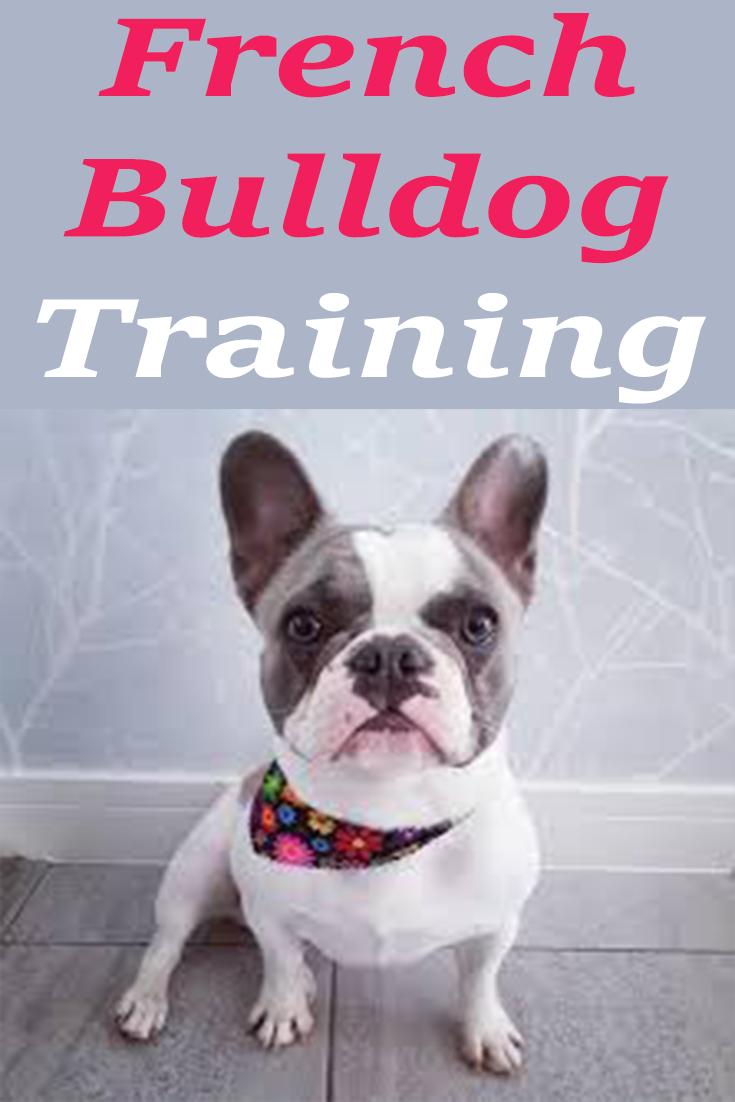 Training your French Bulldog in Socialization Puppy