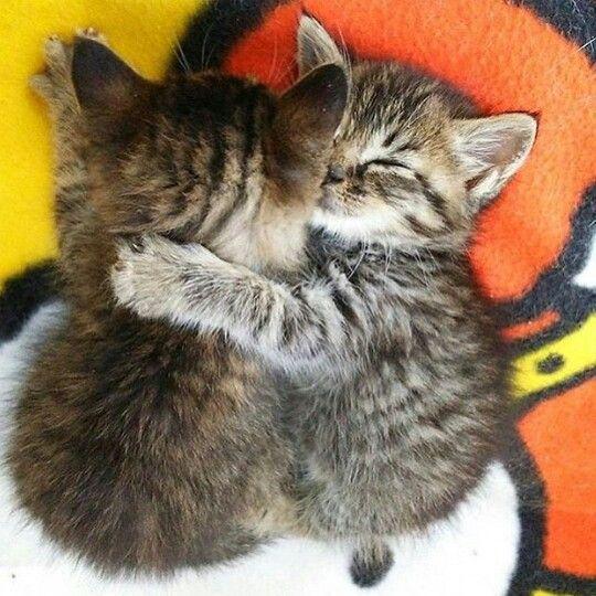 Adorable cuddling kittens