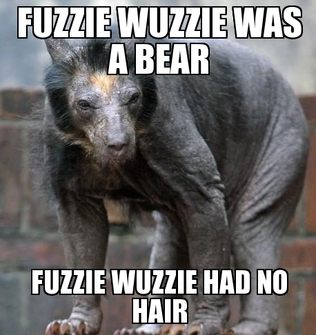 shaved bear google search comical pinterest shaved bear