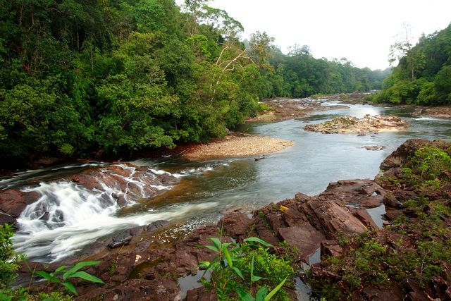 The Endau Rompin State Park Situated In Pahang Is One Of The World S Oldest Tropical Rainforests The P Endau Rompin National Park National Parks State Parks