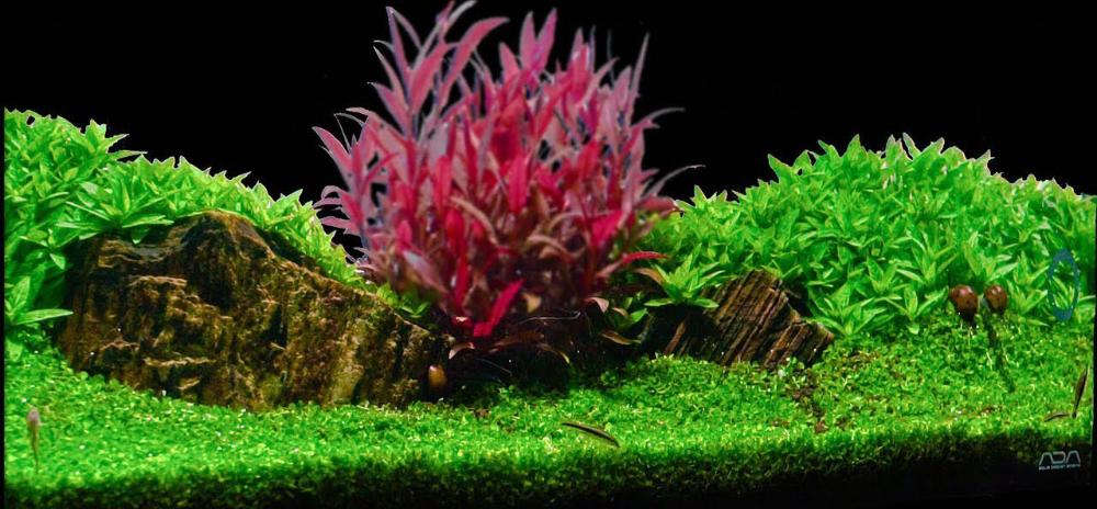 5 Best Aquarium Carpet Plants Gefcoral In 2020 Plants Freshwater Aquarium Plants Live Aquarium Plants