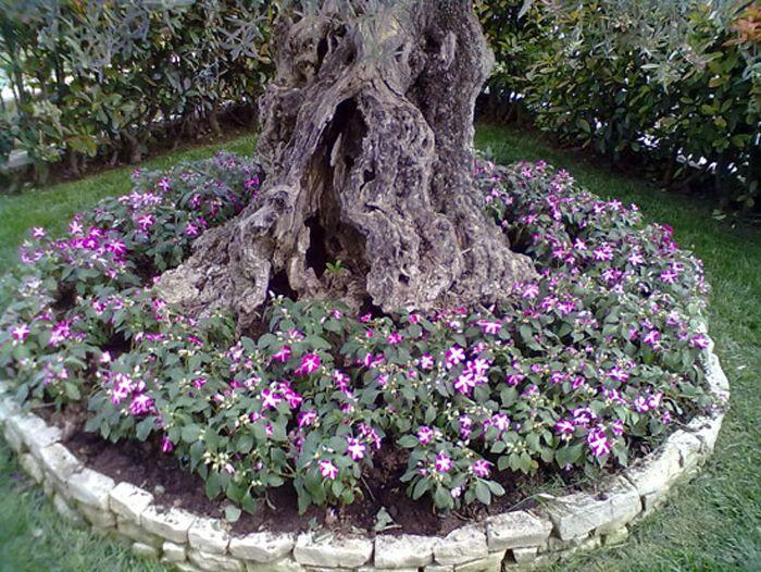 Creare una bella aiuola sotto l 39 albero 20 esempi for Cose per il giardino