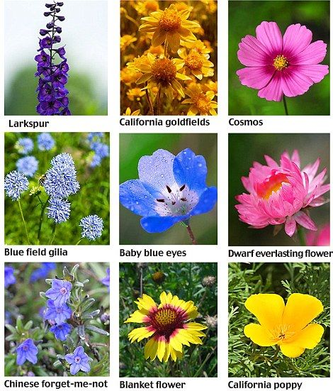 Types of Wildflowers Photo Guide | Pictures of, Cosmos flowers and ...