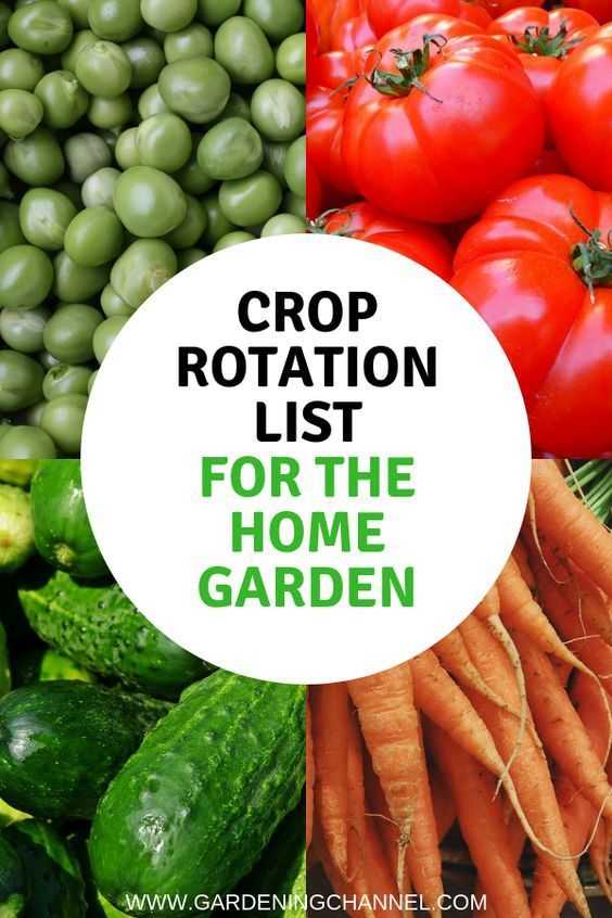 How to rotate crops for even small gardens. Keep your garden and soil healthy and productive.