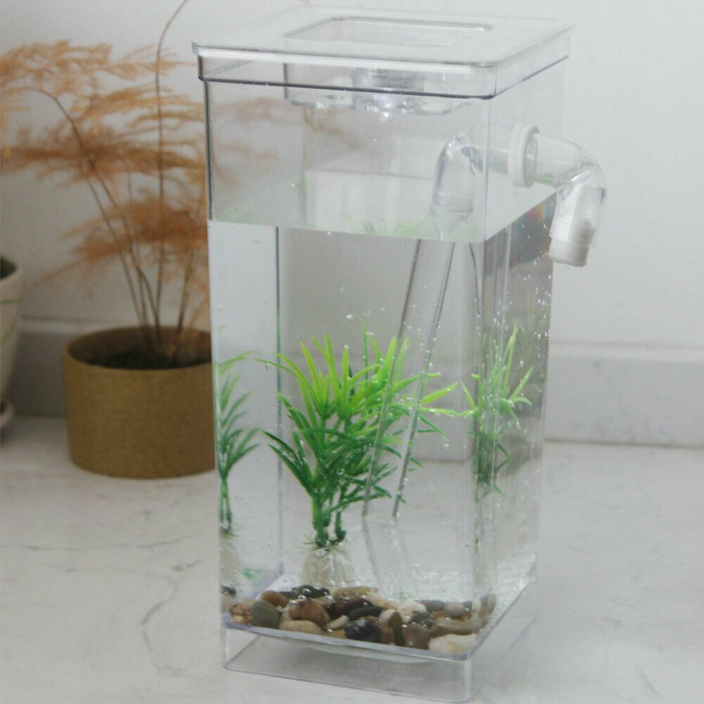 Desktop Ecological Fish Tank Self Cleaning Home Decor Aquarium Goldfish Tank Ideas Of Fish Tank Fishtank In 2020 Self Cleaning Fish Tank Cleaning Fish Fish Tank