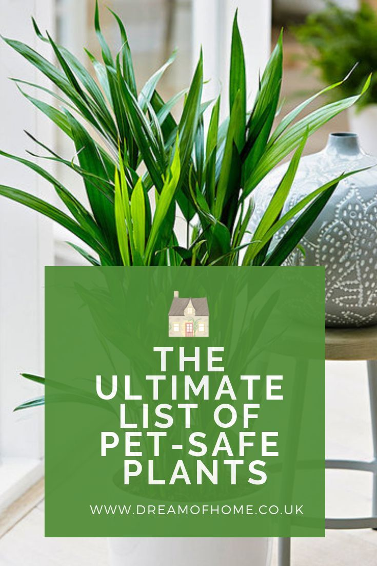 The Ultimate Guide to PetSafe Plants (With images) Safe