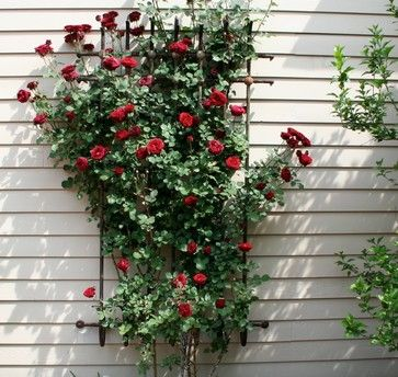 Summer Clean Up Climbing Roses Summer Cleaning Planting Roses