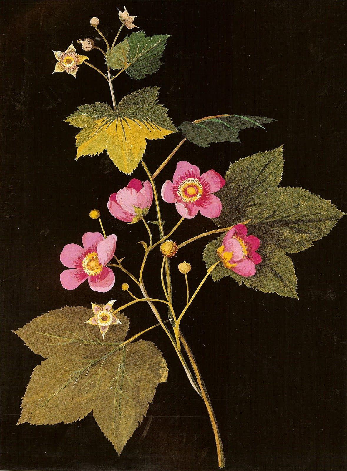 Mary Delany Botanical Art Botanical Drawings Paper Flower Art