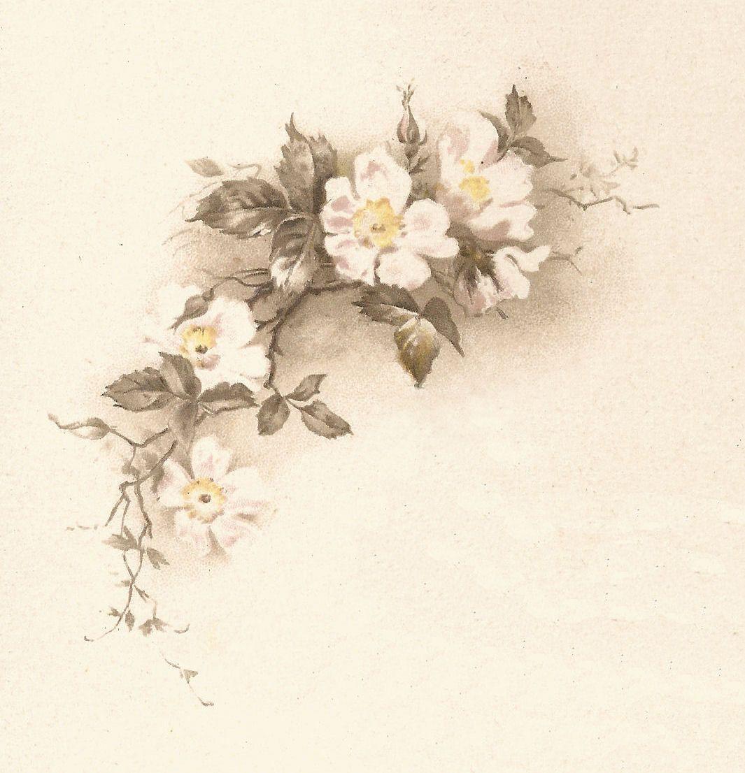 Vintage White Flower Illustration Corner Design Wallpapers