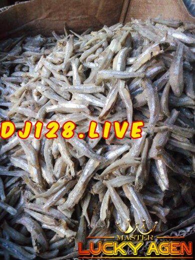 Manfaat Ikan Teri Untuk Ayam Aduan   Ayam, Ikan, Teri