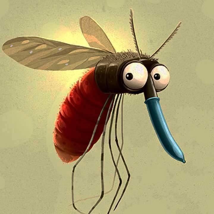 Foto divertente zanzara con preservativo sul pungiglione