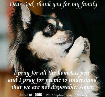 So Sweet Animals That I Love Pinterest Dogs Pets And Animals
