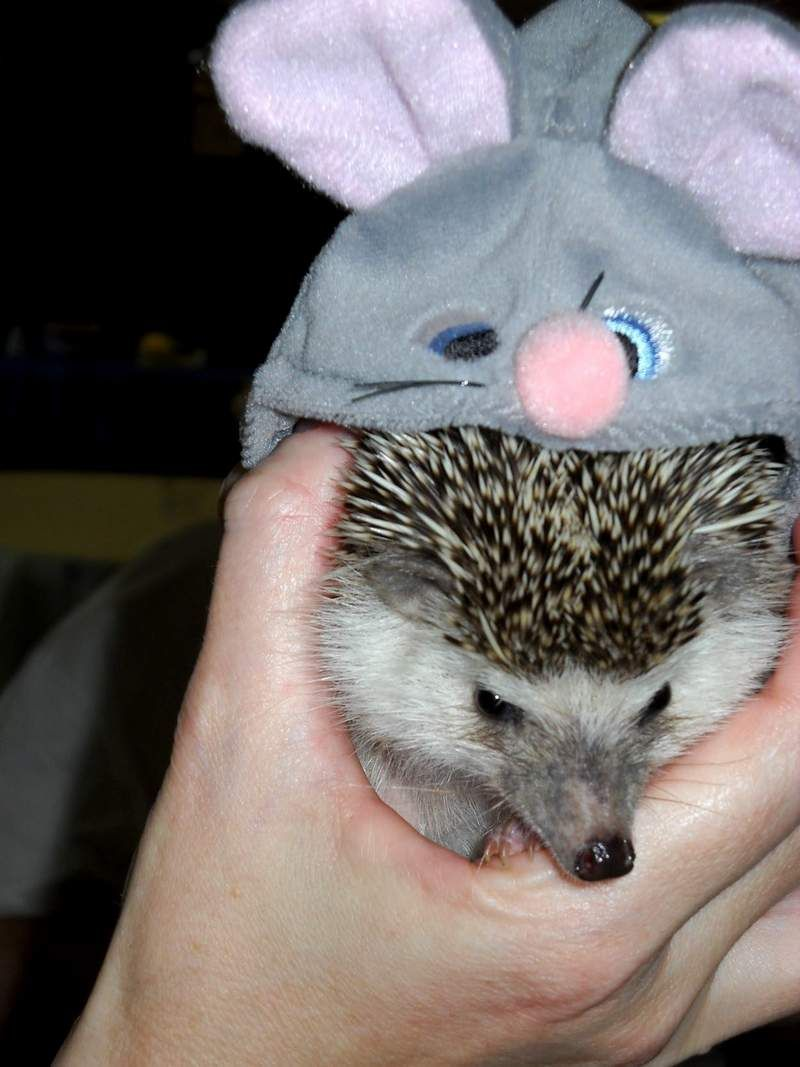 Eastern States Hedgehog Show