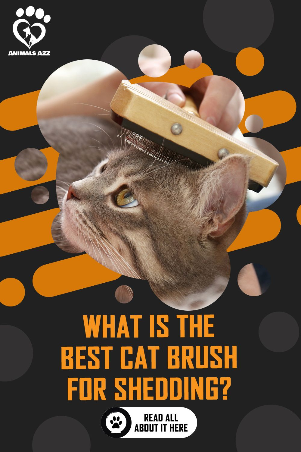 What Kind Of Brush Is Best For Cats Cat Facts In 2020 Cat Facts Cat Brushing Cats