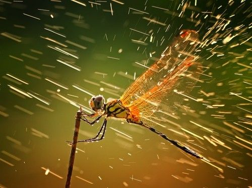 National Geographic gives you something to look forward to with the best pictures of the year. The 2011 pictures are just in. Take a look at the grand prize in nature
